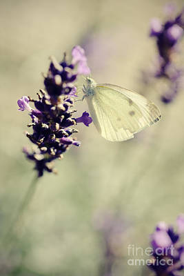 Butterfly.. Art Print by LHJB Photography