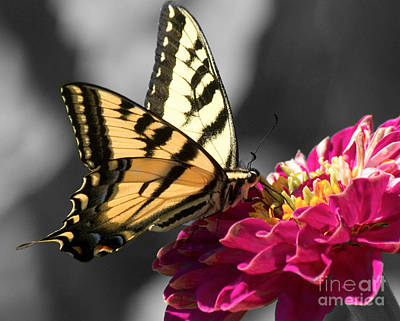Photograph - Butterfly by Jim And Emily Bush