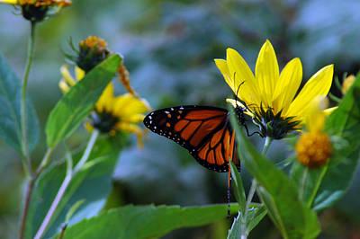 Photograph - Butterfly Kisses by LeeAnn McLaneGoetz McLaneGoetzStudioLLCcom