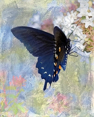 Pipevine Swallowtail Butterfly Photograph - Butterfly Love by Betty LaRue
