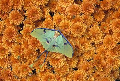 Pasta Al Dente - Butterfly On Flowers by Natural Selection Jeff Lepore