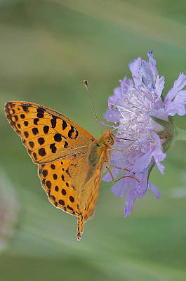 Butterfly On Right Position Art Print by Meeli Sonn
