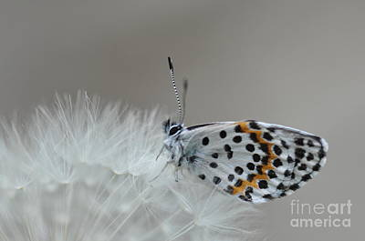 Butterfly Art Print by Sylvie Leandre