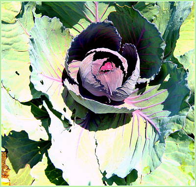 Cabbage Digital Art - Cabbage  by Mindy Newman