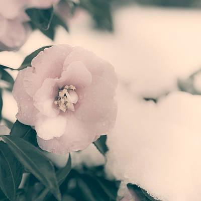 Wet Petals Photograph - Camellia by Joana Kruse