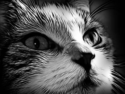 Pet Portraits Digital Art - cat by Tilly Williams