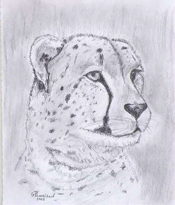 Wildlife Drawing - Cheeta Watching by Gilbert Pennison