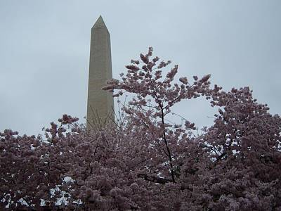Cherry Blossoms At The Washington Monument Original by Tracy Dugas