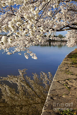 Photograph - Cherry Blossoms by Brian Jannsen