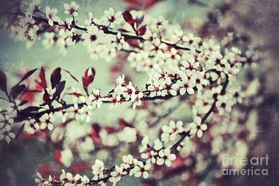 Photograph - Cherry by Traci Cottingham