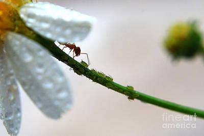 Ant Digital Art - Clean by Kendra Longfellow