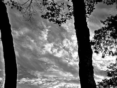 Photograph - Clouds Through Trees by Beth Akerman