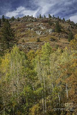 Photograph - Colorado Hillside by David Waldrop