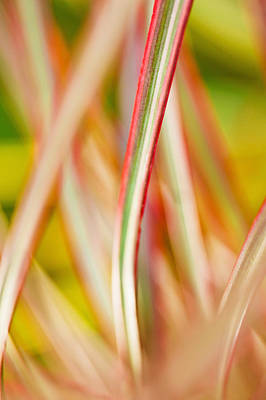 Photograph - Colorful Tropical Plants by MakenaStockMedia - Printscapes