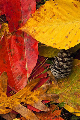 Pine Cones Photograph - Colors Of Autumn by Andrew Soundarajan