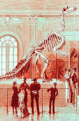Coloured Engraving Of An Iguanodon Museum Exhibit Art Print by Mehau Kulyk