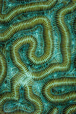 Photograph - Coral Design by Jean Noren
