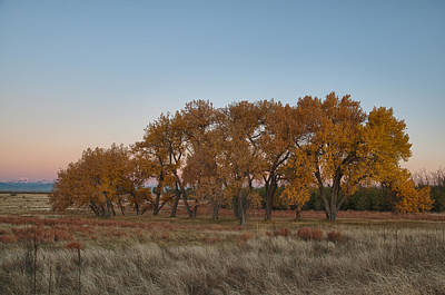 Photograph - Cottonwood Grove by Monte Stevens