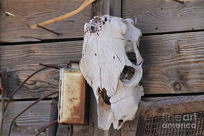 Photograph - Cow Skull On Barn by Pamela Walrath