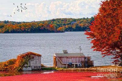 Photograph - Cranberry Bog Farm by Gina Cormier