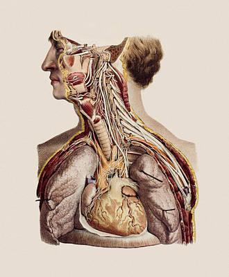 Cranial Nerves Art Print