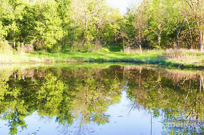 Photograph - Crawfish Pond by Diana Cox