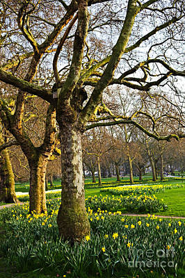 Daffodils In St. James's Park Art Print by Elena Elisseeva