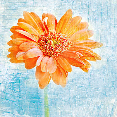 Daisy Print by HD Connelly