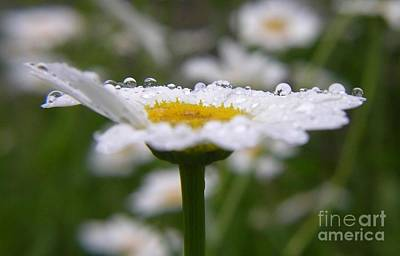 Art Print featuring the photograph Daisy In The Rain by Yumi Johnson