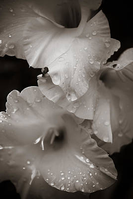 Photograph - Delicate by Peggie Strachan