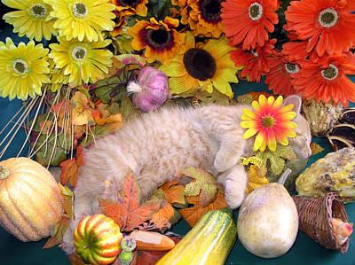 Di Milo - Flower Child - Kitty Cat Kitten Sleeping In Fall Autumn Harvest Art Print by Chantal PhotoPix