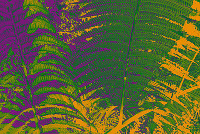 Digital Art - Digital Ferns by Colleen Cannon