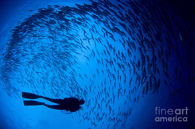 Diver And A Large School Of Bigeye Art Print by Steve Jones