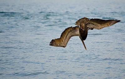 Diving Pelican Art Print by Mike Rivera
