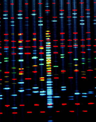 Dna Sequence On A Computer Monitor Screen Art Print by Tek Image
