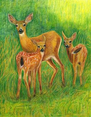 Painting - Doe With Twin Fawns Colored Pencil by Jeanne Kay Juhos