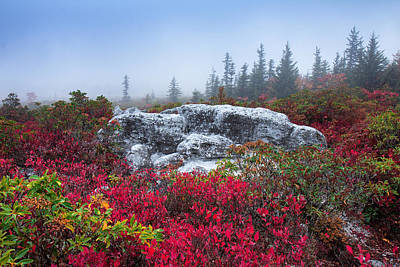 Photograph - Dolly Sods Wilderness by Mary Almond