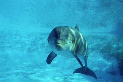 Dolphin In Captivity Art Print by Alexis Rosenfeld