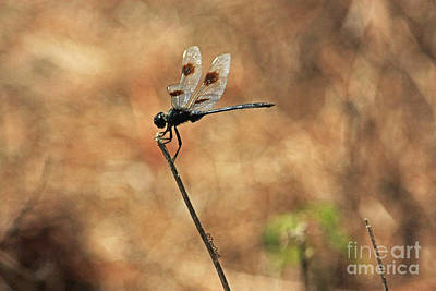 Photograph - Dragonfly At Rest by Terri Mills