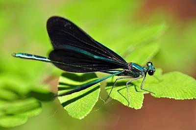 Animals Photograph - Dragonfly by Glenn Gordon