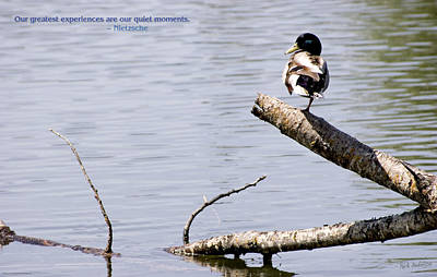 Photograph - Duck On A Log by Mick Anderson