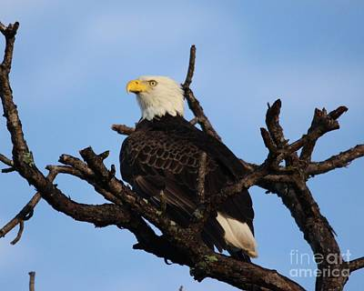 Photograph - Eagle by Jeanne Andrews
