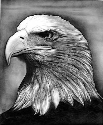 Black And White Eagle Drawing - Eagle by Jerry Winick