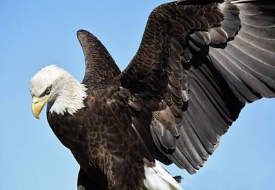 Eagle Art Print by Paulette Thomas
