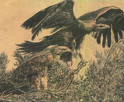 Eagle's Roost Art Print