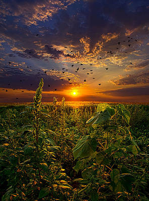 Early Bird Special Print by Phil Koch
