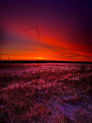 Goose Portrait Photograph - Early To Rise by Phil Koch