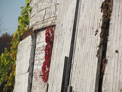 Lady Bug - East Barn Door by Tina M Wenger