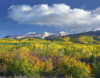 East Beckwith Mountain Flanked By Fall Print by Tim Fitzharris