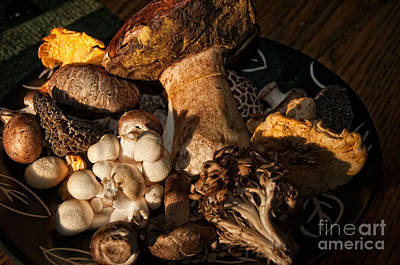 Digital Art - Edible Wild Mushrooms by Carol Ailles